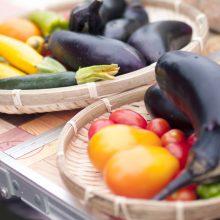 畑の空気を胸いっぱい、朝どれ野菜でお腹いっぱい!