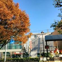 池田駅前ふくまるくん近くの木も紅葉していました♪