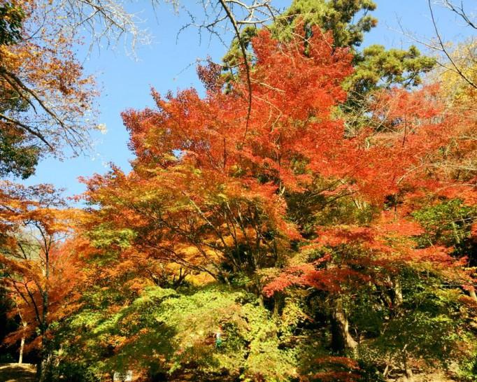 紅葉がとても綺麗な五月山公園