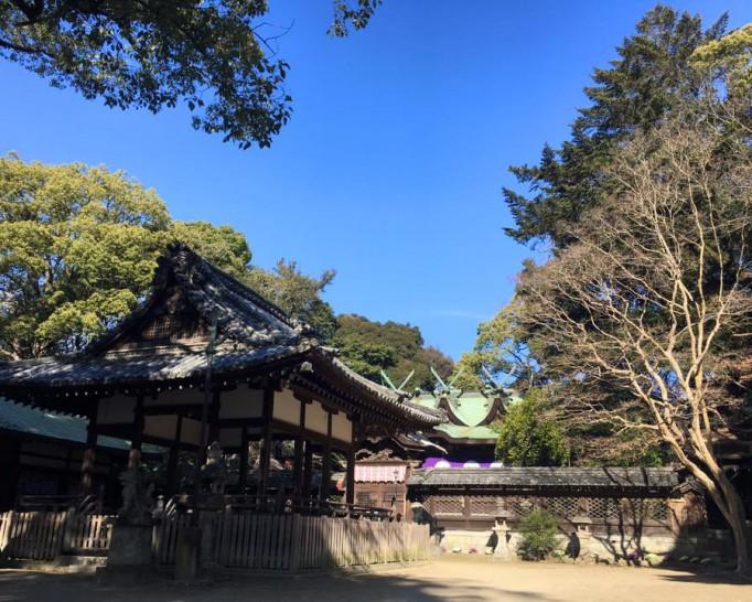 椿の花が満開の伊居太(いけだ)神社に来ました。