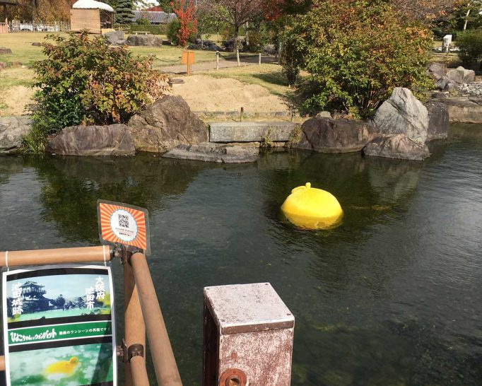 池田城跡公園の池に浮かぶ黄色い物体を発見! その正体は…