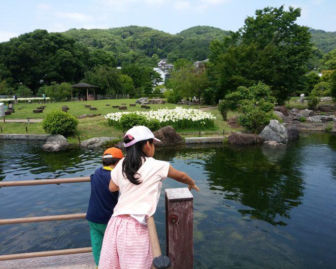 満開の白ゆりを見に池田城跡公園に行ってきました!