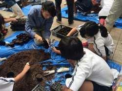 ほそごう学園「花いっぱいプロジェクト」