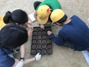 きたてしま学園 北豊島小学校「花いっぱいプロジェクト」