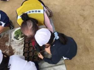 きたてしま学園 神田小学校「花いっぱいプロジェクト」