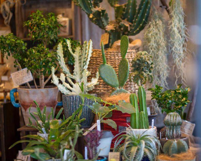 植物の成長を家族で見守るいい時間を。オーナー夫妻によってセレクトされた植物といろいろのお店『Sora to Tane 宙と種』