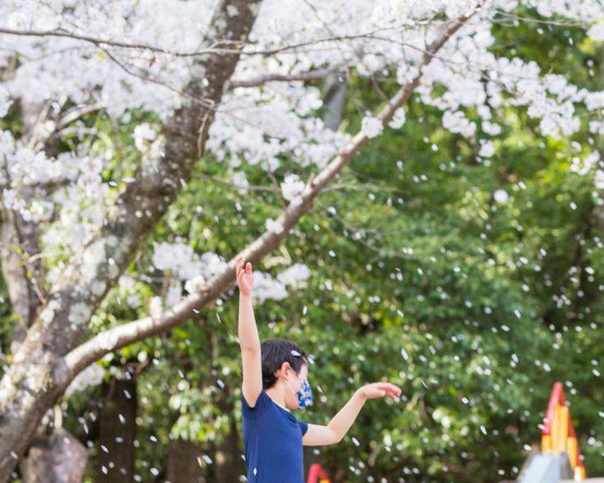 おさんぽ花見にピッタリ! 桜満開の五月山公園