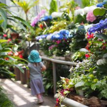 おもしろい&めずらしい熱帯植物がたくさん  五月山緑地都市緑化植物園