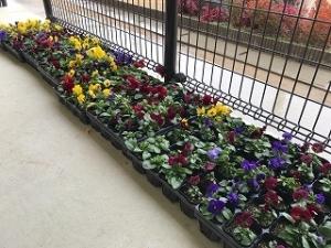 きたてしま学園「花いっぱいプロジェクト」