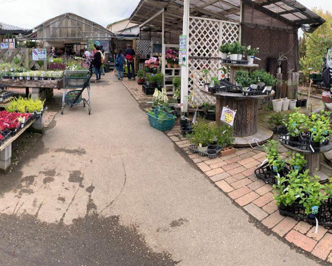 植物のテーマパークで四季折々の草花を満喫! ガーデンセンター華遊
