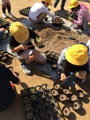 きたてしま学園北豊島小学校『花いっぱいプロジェクト』の取り組み