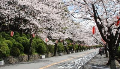 夜桜で思いを伝えませんか? メッセージ募集中。